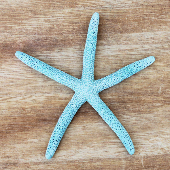 Aqua Dyed Finger Starfish