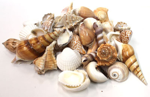 Large Indian Mix 1kg Seashells
