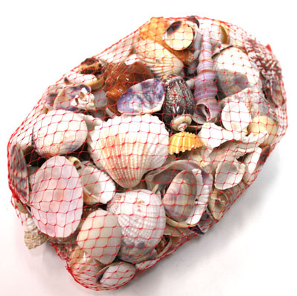 Medium Indian Mix 1kg Seashells