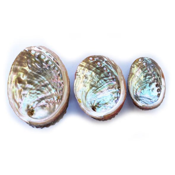 Threaded Abalone Shell