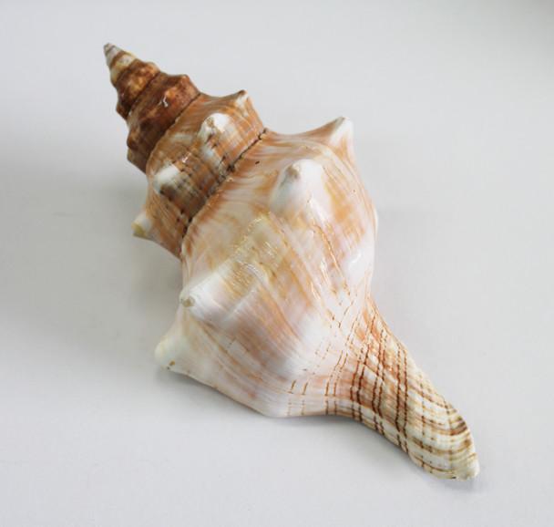Fox Shell