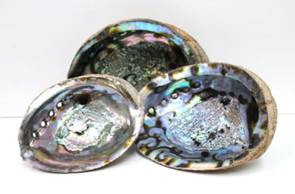 Blue/Green Abalone Shells
