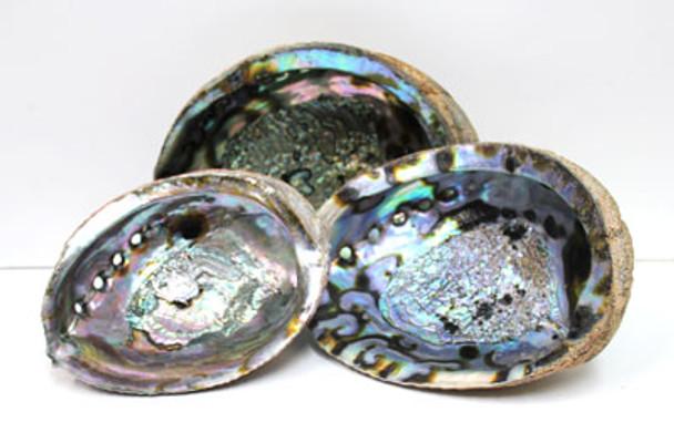Blue/Green Abalone Shells