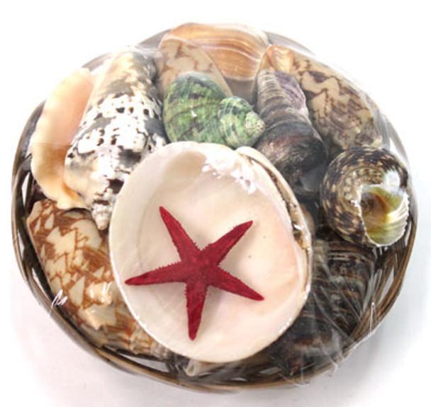 "8"" Shell Basket"