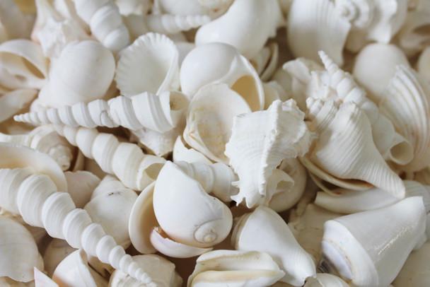 Closeup of White Mix
