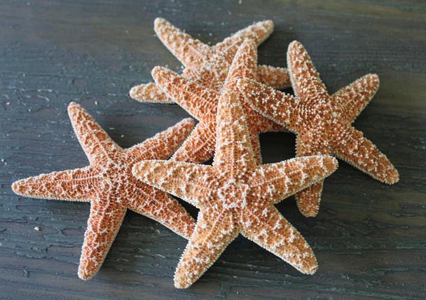 small sugar starfish assortment