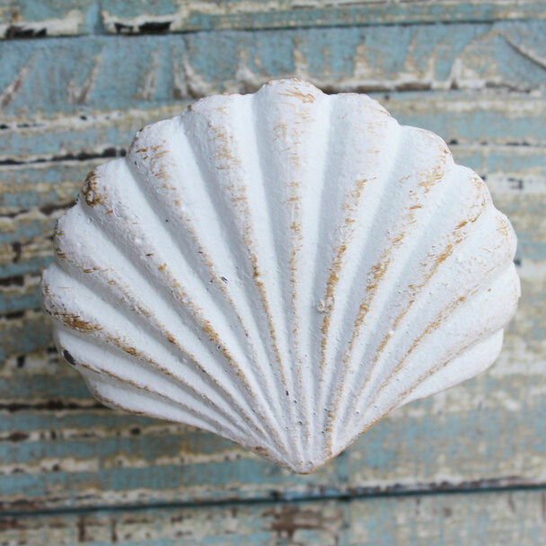 White Scallop Shell Iron Knob