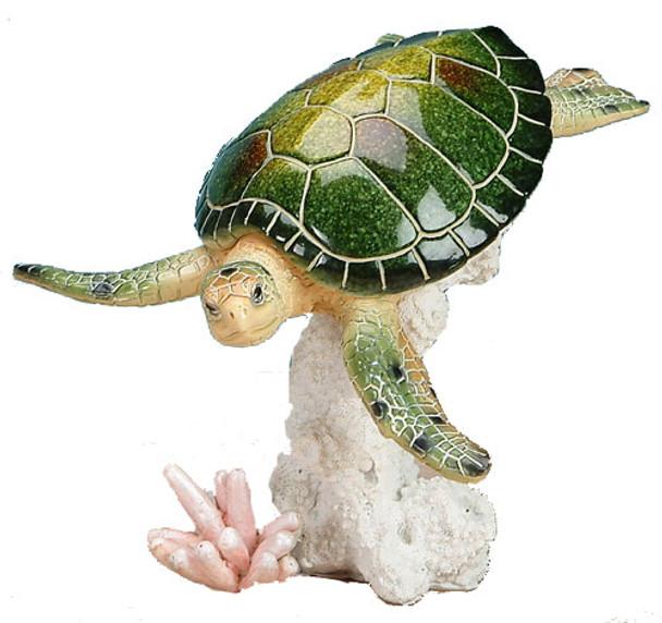 Green Sea Turtle on Coral