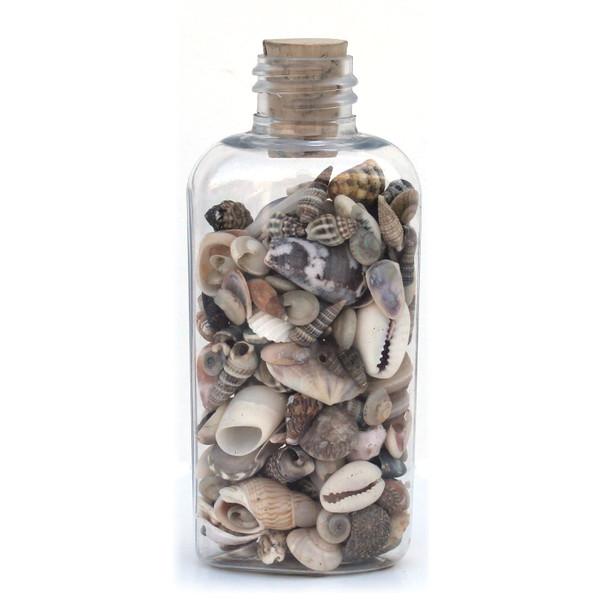 Flat Plastic Seashell Bottle