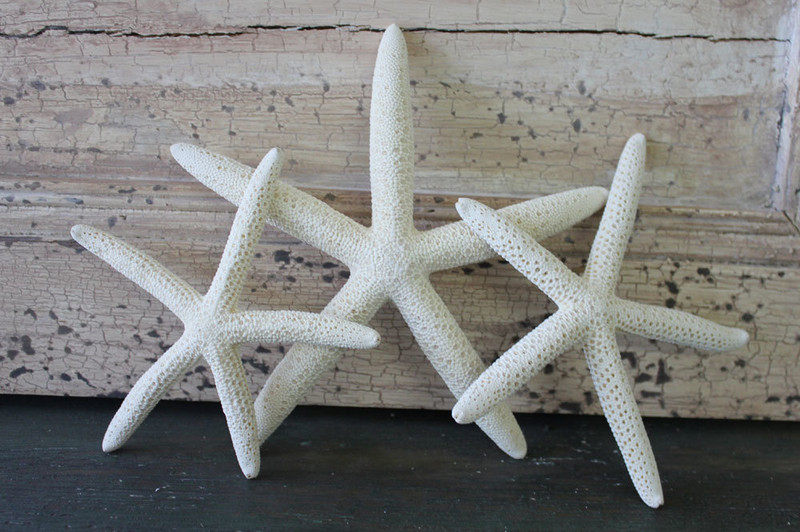 Keeping Dried Starfish Clean and Odor-Free
