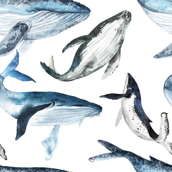 PUL Whale Migration