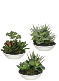 "4"" porcelain bowl with a variety of faux succulents! Kalanchoe, jade plant, sedum, and more look and feel so real! Each mini bowl will have a random mix of assorted succulent types. Beautiful and carefree decor for anywhere in your home. Sold individually"