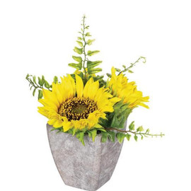 "The bright sunny blooms of this potted sunflower, will add a cheery touch to your bedside table, kitchen counter top, or next to your reading lamp. Compact in size, but not in beauty, it looks good in any room! Dimensions:	6""L x6""W x6""H"