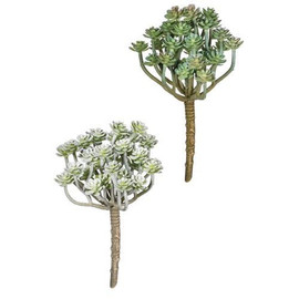 """These soft aeonium picks are a prerequisite for your modern-day bouquets, terrariums, and planter pots. Tucked amongst your designs, their varying green hues will bring an array of texture and detail to any piece. Dimensions:4.5""""L x4""""W x7.5""""H  Sold individually."""