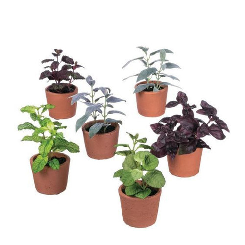 "Perfectly potted for display together or alone, this group of herbs are a better-than-real alternative perfect for every home. So realistic that your friends will wonder how you grew such a pretty healthy plant on that shady counter! Dimensions:	4""L x5.5""W x5.5""H Weight: 7 oz  Sold individually."
