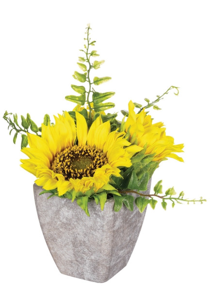 Sunflower Potted Plant 6 x 6