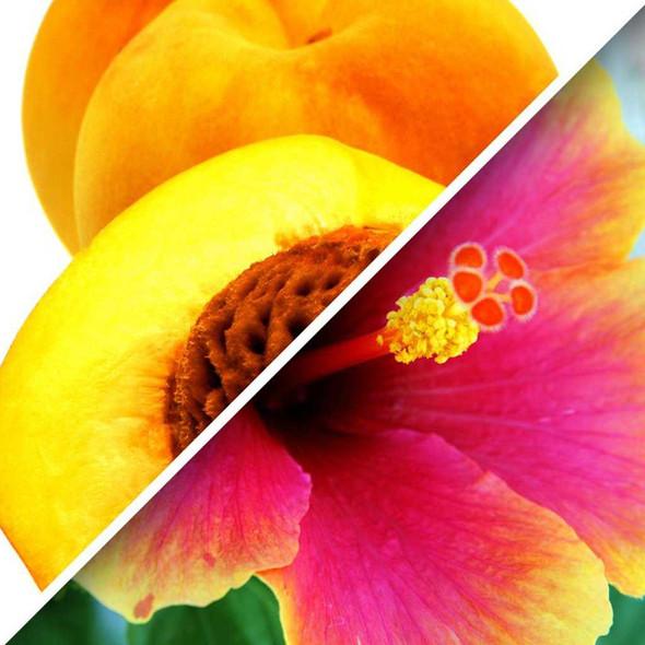 Herbal Peach Hibiscus Tea 1.6 oz Packaged Tea The Nut House