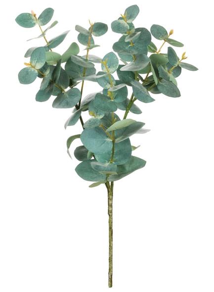 Eucalyptus Spray