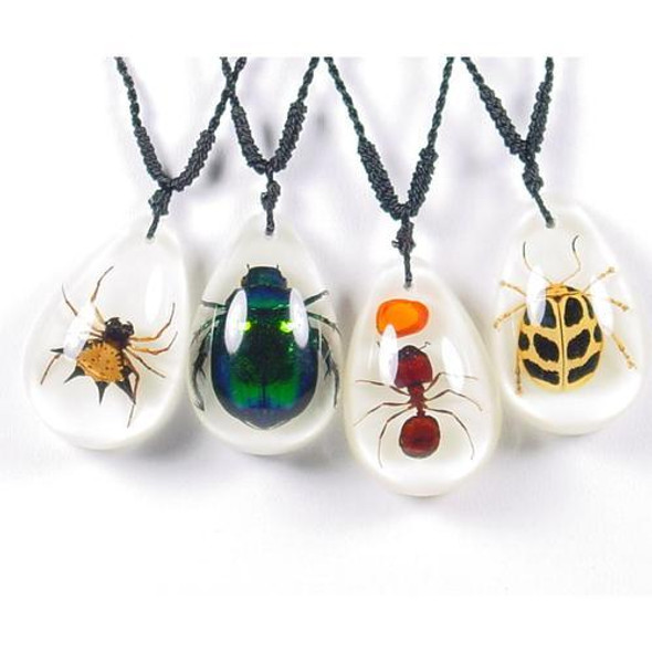Choose between four assorted insects.  Sold individually.