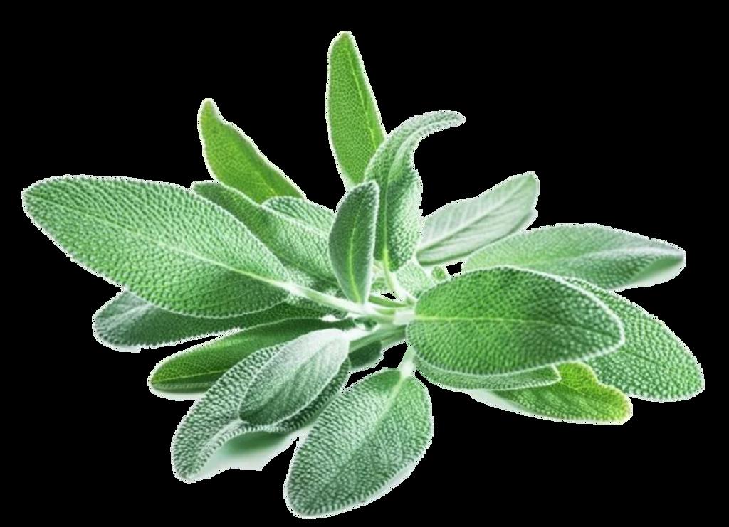 Sage Infused Olive Oil 375ml