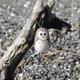 Felted Wool Ornament Owl alt