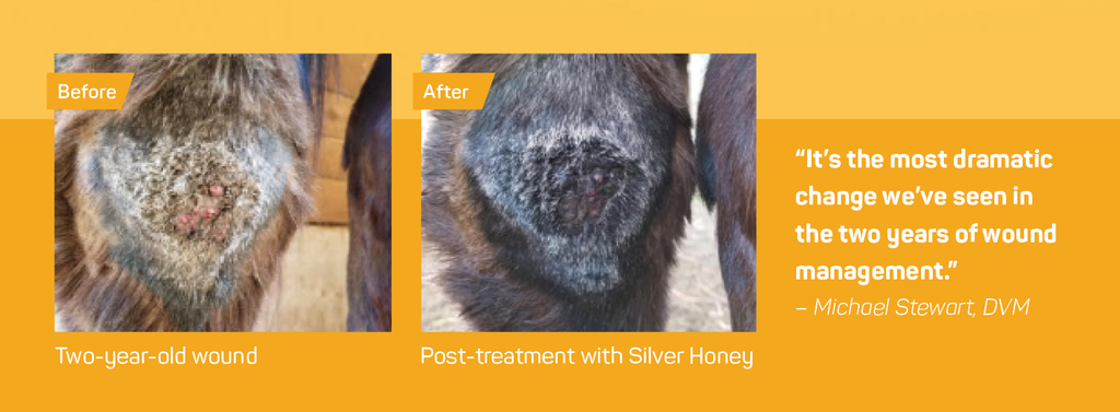 Before and After use of Silver Honey Rapid Wound Repair