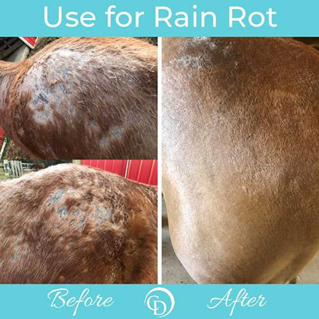 Rain Rot before and after coat defense use