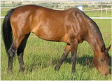 Changes in Health Management of Horses with Growing Age