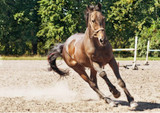 Problems Associated to A Horse's Legs - Horse Health and Fitness