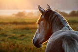 Insect Control To Help Horses