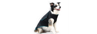 Benefab Canine comfort and care shirt