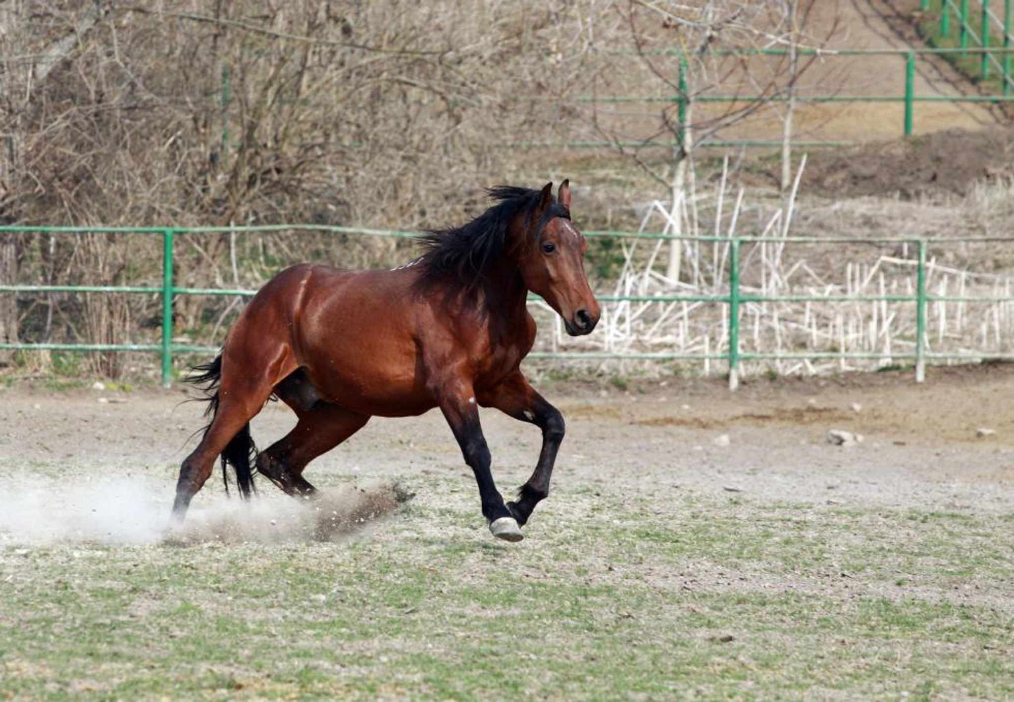 Different Types of Horse Gaits You Should Know
