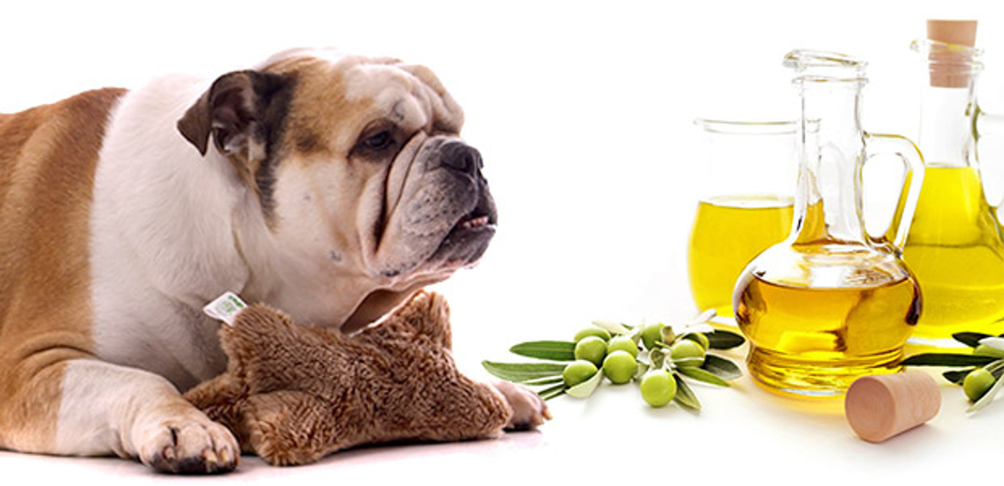 Neem Oil: Part II - Is it safe for my pet?