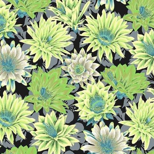 Cactus Flower - Contrast