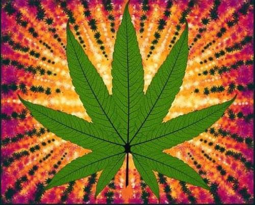 Cannabis panel - 36 inches - 1022P 66 Green