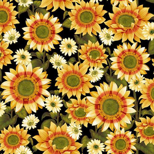 Pumpkin Harvest 2662-99 Black Sunflower