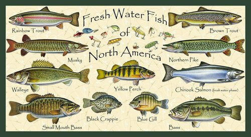 "Keep it Reel Freshwater Fish 24"" panel"