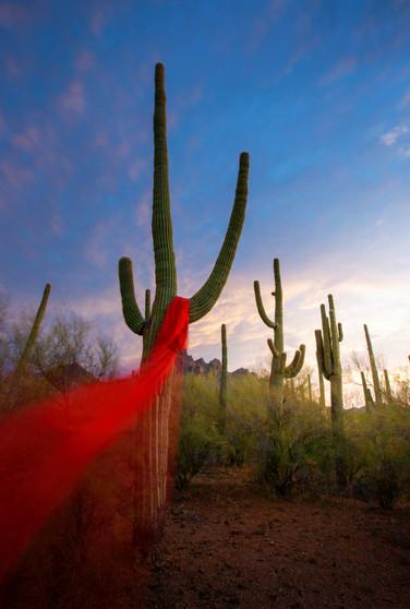 """Repose of Spirit- Saguaro National Park""- 24"" x 18"" x 1.50"" Photographic Canvas (Image and Print ©SternHatcher)"