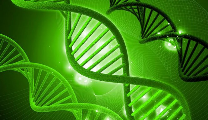 Hemp Can Repair DNA