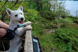 Cottage Holidays With Your Dog