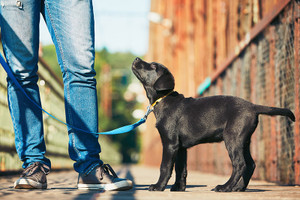 5 Common Dog Training Mistakes