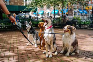Choosing a Good Dog Walker