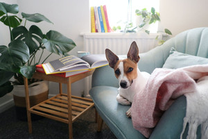 Alternatives to leaving your dog at home