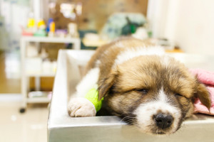 Our Guide To Some Of The Most Common Puppy Illnesses