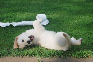 Your New Puppy – Two Rules to Training Success