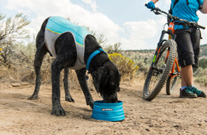 Hot Hound? Dog Cooling Gear