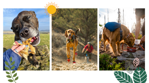 Hiking In Summer With Your Dog