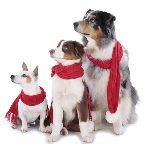 dogs in red scarfs