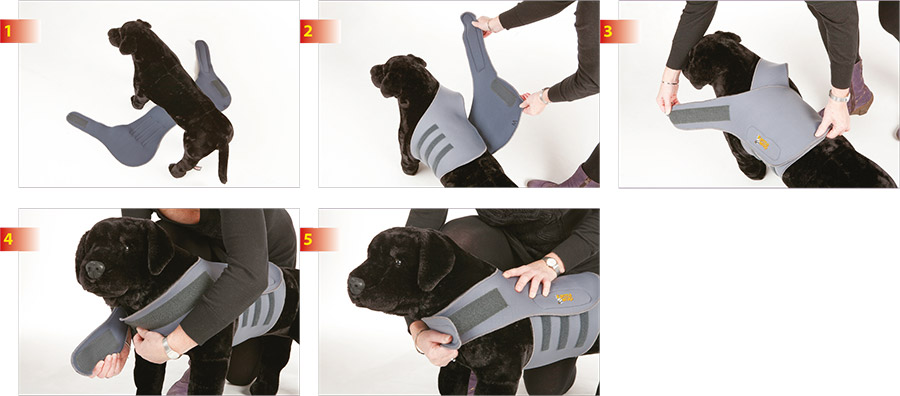 fit-instructions.jpg