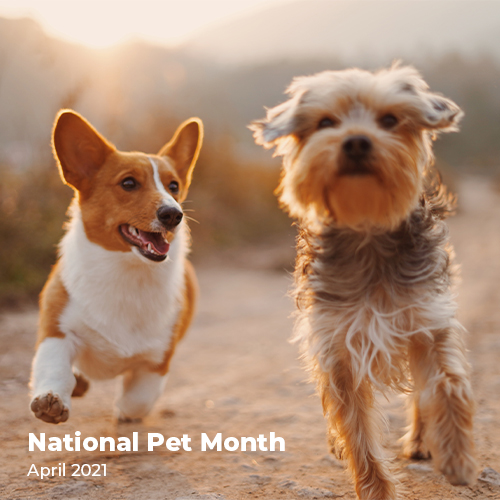 National Pet Month on K9 Active Instagram